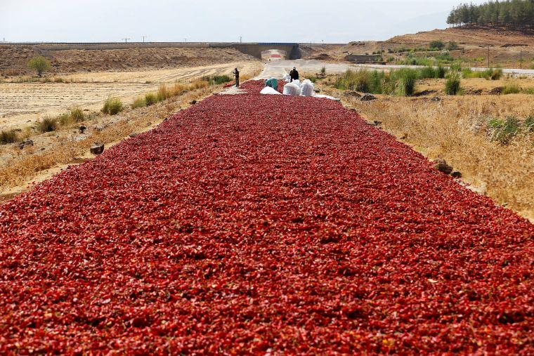 2016 08 29T150212Z 929448868 D1BETYGBEYAA RTRMADP 3 TURKEY AGRICULTURE