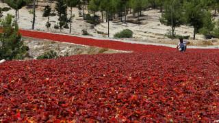 Τουρκία: Έστρωσαν το δρόμο με καυτερές πιπεριές