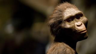 Ο αυστραλοπίθηκος Λούσι σκοτώθηκε πέφτοντας από ένα δέντρο πριν από 3 εκατομμύρια χρόνια