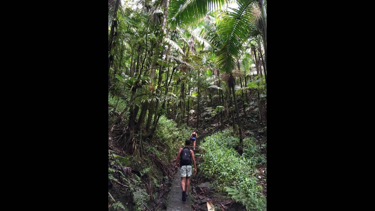 https://cdn.cnngreece.gr/media/news/2016/08/29/44440/photos/snapshot/puerto-rico-forest.jpg