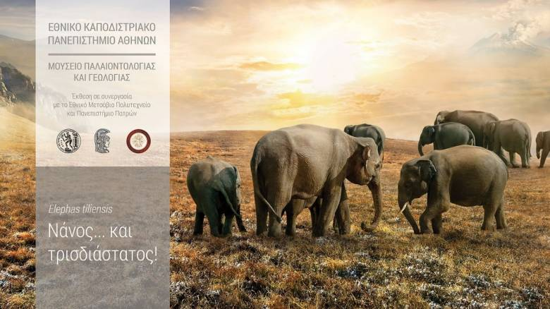 Εγκαίνια της έκθεσης του ελέφαντα της Τήλου στο Μουσείο Γεωλογίας και Παλαιοντολογίας του ΕΚΠΑ
