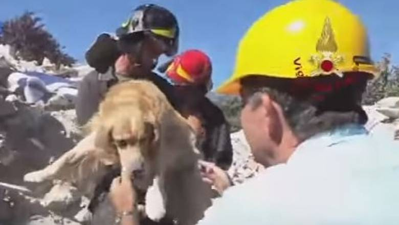 Ιταλία: Golden Retriever εντοπίστηκε ζωντανό κάτω από συντρίμμια 9 μέρες μετά τον σεισμό (vid)