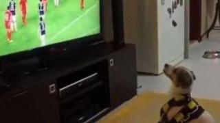 Ο σκύλος που πανηγυρίζει έξαλλα το γκολ της ομάδας του (vid)