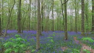 To «μαγεμένο δάσος» του Hallerbos
