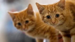 Ταλαιπωρείστε τη γάτα σας... στο τάισμα για να είναι υγιής και ευτυχισμένη (vid)