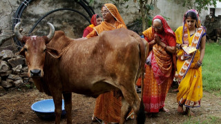 Ινδία: Βίασαν 20χρονη και σκότωσαν συγγενείς της με την κατηγορία ότι έφαγαν μοσχάρι