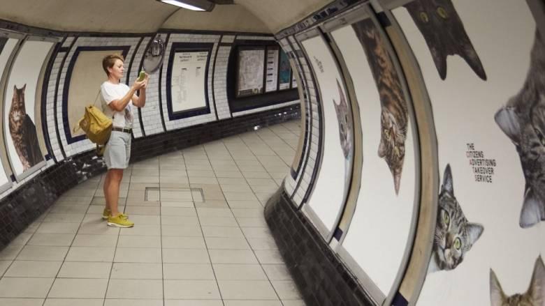 Meow: Οι γάτες κατέκτησαν τη μητρόπολη του Λονδίνου