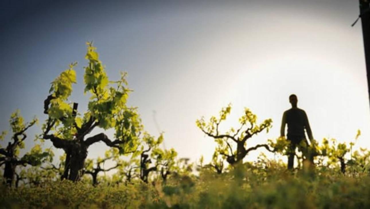 Wine Enthusiast Star Awards 2016: σημαντική διάκριση για τον κρητικό Αμπελώνα