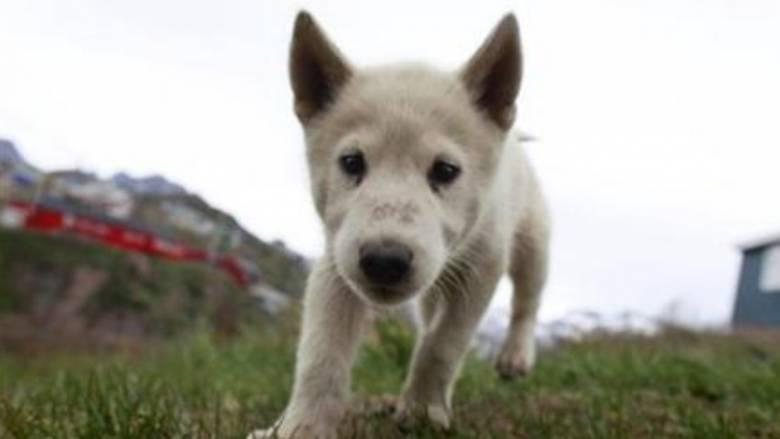 Ελβετία: Τέλος τα υποχρεωτικά φροντιστήρια για κατόχους σκύλων