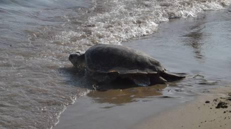 Μην ταϊζετε τις θαλάσσιες χελώνες για μια φωτογραφία