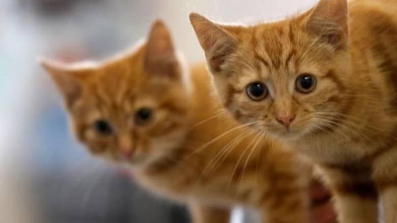 Πώς οι γάτες κατέκτησαν τον κόσμο