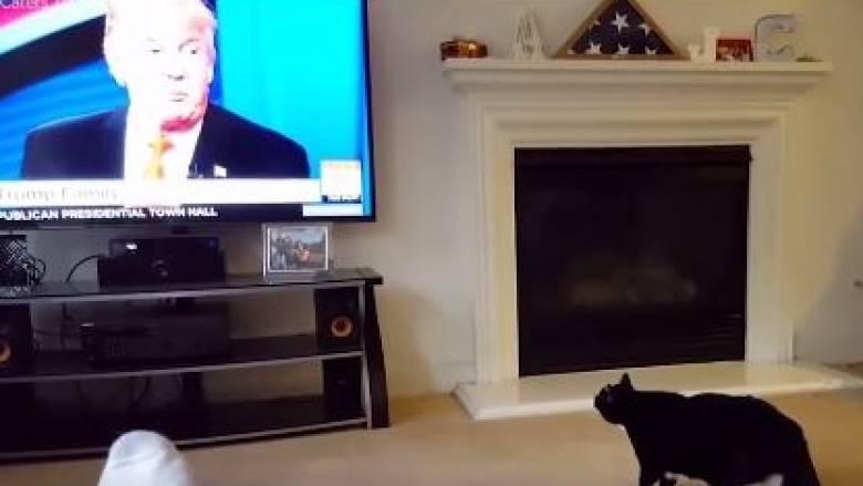 Ακραίες αντιδράσεις γάτων και σκύλων που μισούν τον Ντόναλντ Τραμπ (vid)