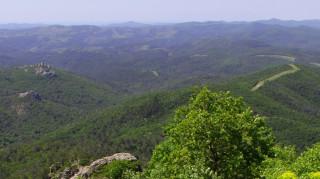 Δημόσια διαβούλευση για το Εθνικό Πάρκο του Δάσους Δαδιάς
