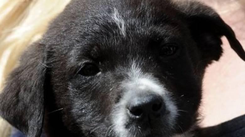 Οι σκύλοι μυρίζουν τον καρκίνο, αλλά όχι σε σημείο να είναι πλήρως αξιόπιστοι