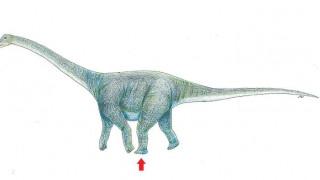 Επιστήμονες ανακάλυψαν απολίθωμα πατημασιάς δεινοσαύρου μήκους ενός μέτρου (pic)