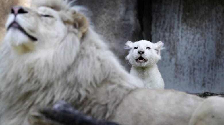 Παγκόσμια Ημέρα Ζώων: Οι… εορτάζοντες σε εικόνες