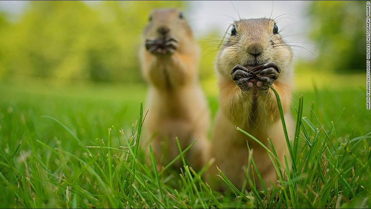 https://cdn.cnngreece.gr/media/news/2016/10/04/48912/photos/snapshot/comedy-animals-aaron-karnovski.jpg