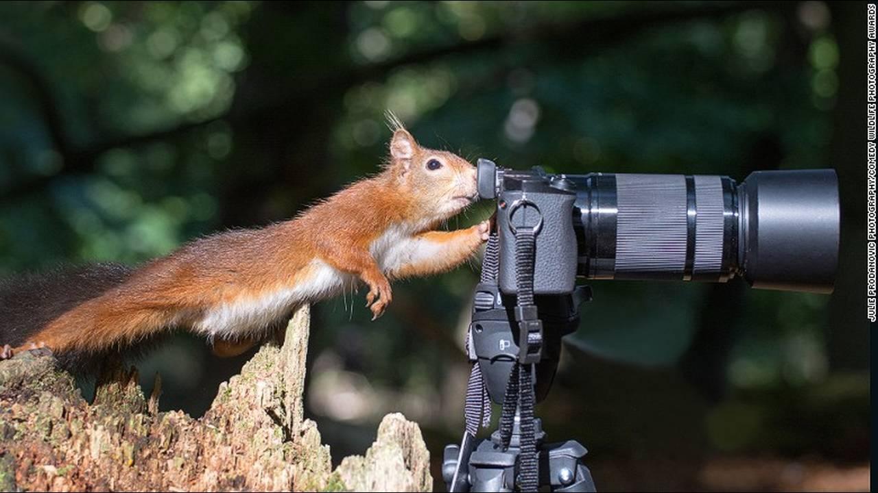 https://cdn.cnngreece.gr/media/news/2016/10/04/48912/photos/snapshot/comedy-animals-julie-hunt.jpg