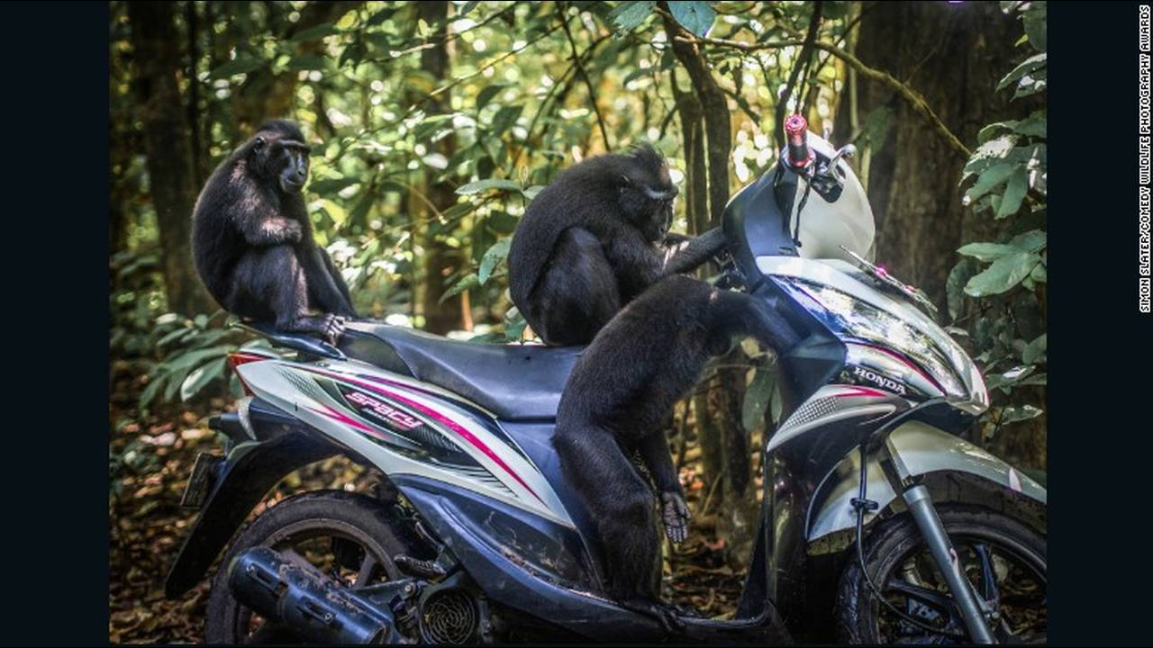 https://cdn.cnngreece.gr/media/news/2016/10/04/48912/photos/snapshot/comedy-animals-motorbike.jpg