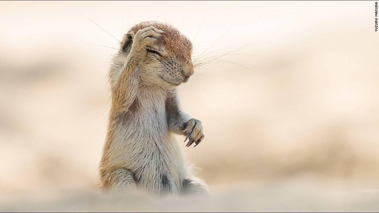 https://cdn.cnngreece.gr/media/news/2016/10/04/48912/photos/snapshot/comedy-animalsyuzuru-masuda-2.jpg