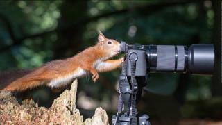 Παγκόσμια Ημέρα (Πολύ Αστείων) Ζώων: Οι φίλοι μας έχουν χιούμορ