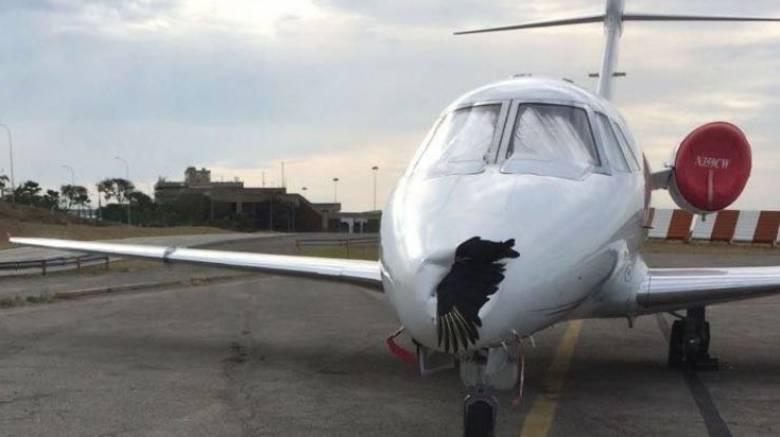 Αεροσκάφος προσγειώθηκε με νεκρό πουλί καρφωμένο στο μύτη του (pics)
