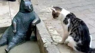 Ο αραχτός γάτος της Κωνσταντινούπολης και πρωταγωνιστής δεκάδων memes έγινε άγαλμα (pics)