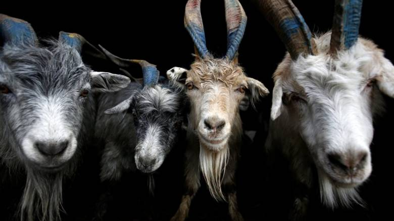 Βόλος: Προκαταρκτική εξέταση για υπόθεση κτηνοβασίας
