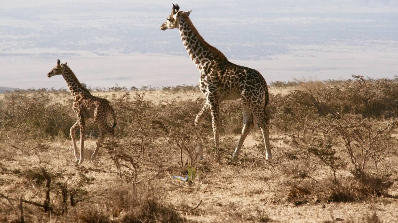 Τανζανία - Ζανζιβάρη με παιδιά!