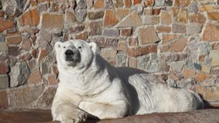 Πέθανε ο ιστορικότερος αρκούδος της Ρωσίας
