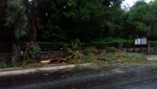 Κακοκαιρία και πτώσεις δένδρων στο Αγρίνιο (pic+vid)