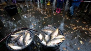 80.000 πέστροφες, 3 κιλών η κάθε μία το «έσκασαν» στη Βαλτική