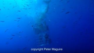Νέα επίθεση λευκού καρχαρία σε δύτες κόβει την ανάσα (vid)