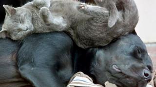 Σας σκέφτονται οι γάτες και οι σκύλοι σας όταν κοιμούνται; (pics)