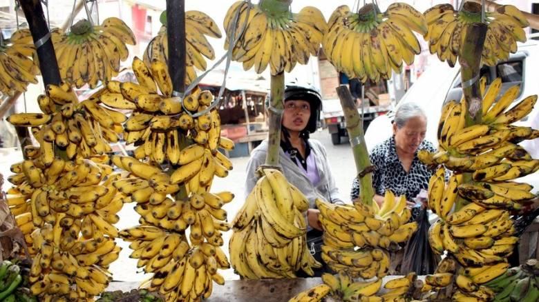 Μπανάνα: Το πιο διάσημο φρούτο απειλείται (ξανά) με εξαφάνιση