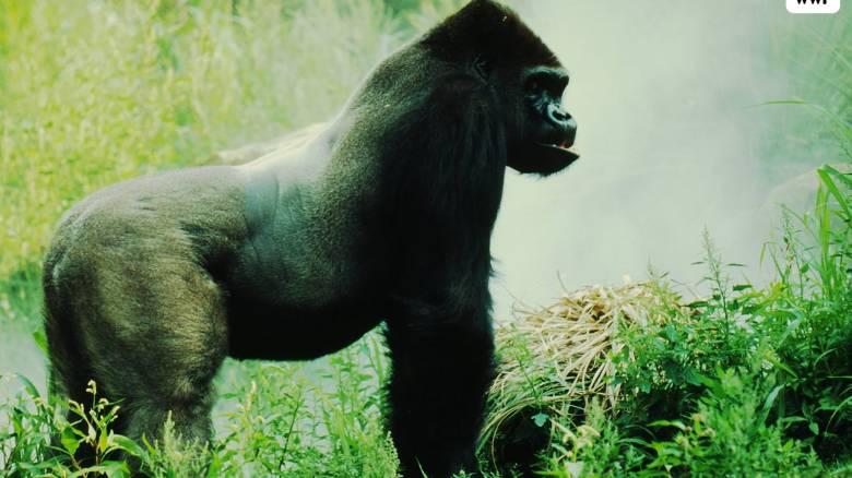WWF: Ο πλανήτης στα πρόθυρα εμφράγματος