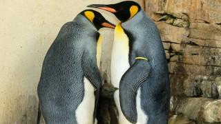 Το σπίτι των Πιγκουίνων έγινε η μεγαλύτερη προστατευόμενη θαλάσσια περιοχή στον κόσμο