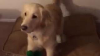 Φόρεσε στολή για το Halloween ίδια με το παιχνίδι του σκύλου του-Δείτε αντίδραση... (vid)