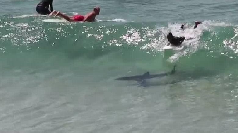 Η τρομακτική στιγμή που καρχαρίας κολυμπά κάτω από σανίδα ανυποψίαστου σέρφερ (pics & vid)