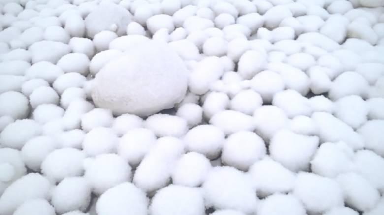 Τι γυρεύουν εκατοντάδες χιονόμπαλες στον Αρκτικό κύκλο; (pics & vid)