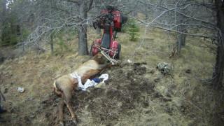 Nεκρό ελάφι «εκδικήθηκε» τον κυνηγό του με τον πιο απρόσμενο τρόπο