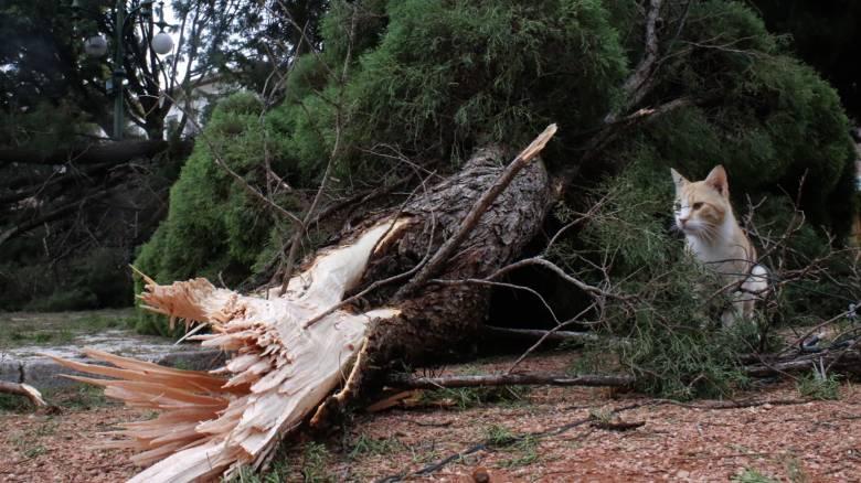 Εκτεταμένες καταστροφές από την κακοκαιρία  (pics + vid)