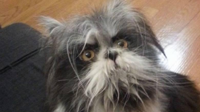 Το ζώο που έχει διχάσει το διαδίκτυο. Είναι σκύλος ή γάτα;