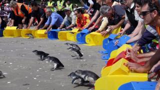 Υπόγεια διάβαση για… πιγκουίνους