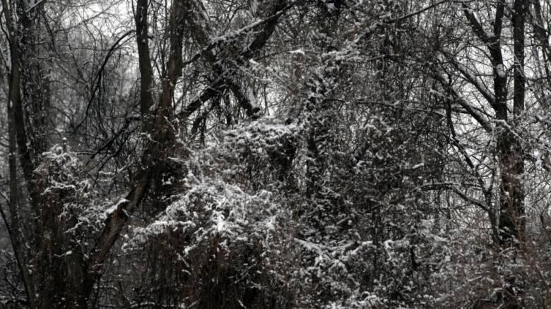 Έπεσαν οι πρώτες νιφάδες χιονιού στον Χορτιάτη