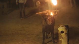 Έβαλαν φωτιά σε ζωντανό ταύρο σε φεστιβάλ της Ισπανίας (Σκληρές εικόνες)