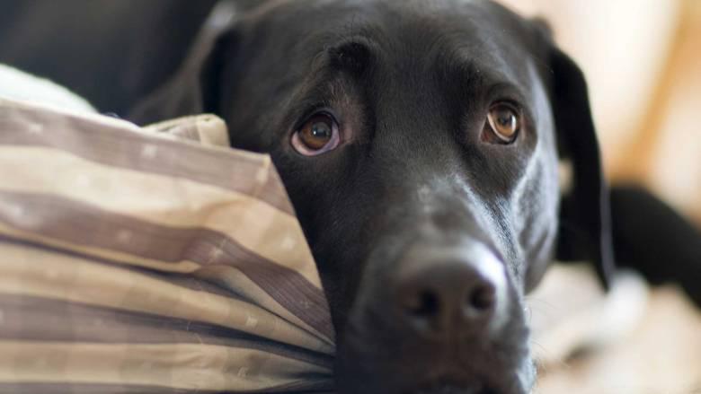 Πρόεδρος φιλοζωικής εξόντωσε 2.000 γάτες και σκύλους