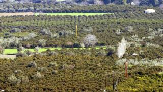 ΕΛΓΑ: Καταβολή αποζημιώσεων σε παραγωγούς την Πέμπτη 23/11