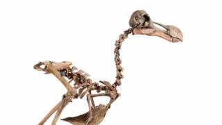 Έδωσε ποσό «μαμούθ» για την απόκτηση ενός σκελετού ντόντο (pics)