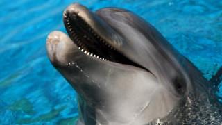 Πύργος: Συγκινητική επιχείρηση διάσωσης δελφινιού